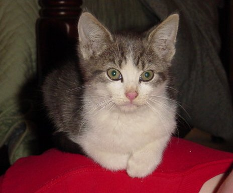 http://bonius.com/images/2004/10/25/Kitty.JPG
